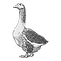 lapiz-pato